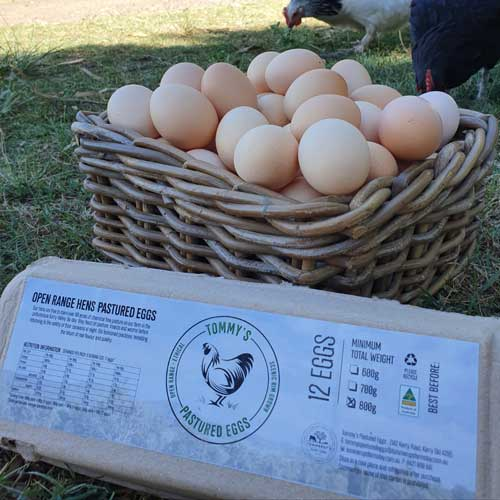 Tommys-Pastured-Eggs-&-Chickens